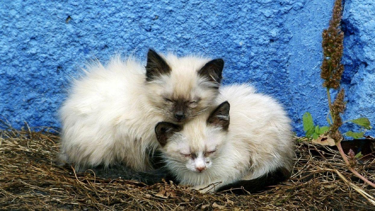 kittens cat cats kitten baby cute (6) wallpaper