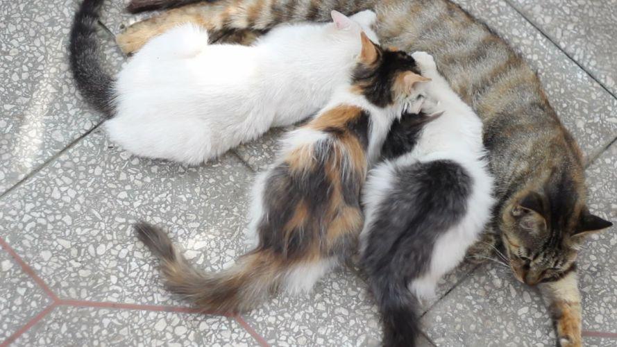 kittens cat cats kitten baby cute (9) wallpaper