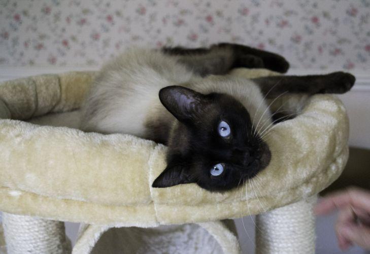 cat cats wallpaper