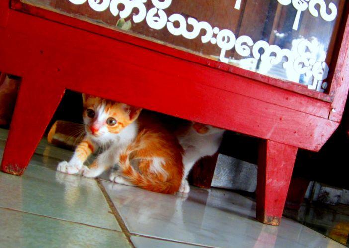 kittens cat cats kitten baby cute (15) wallpaper