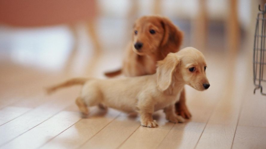 puppies puppy baby dog dogs (3) wallpaper