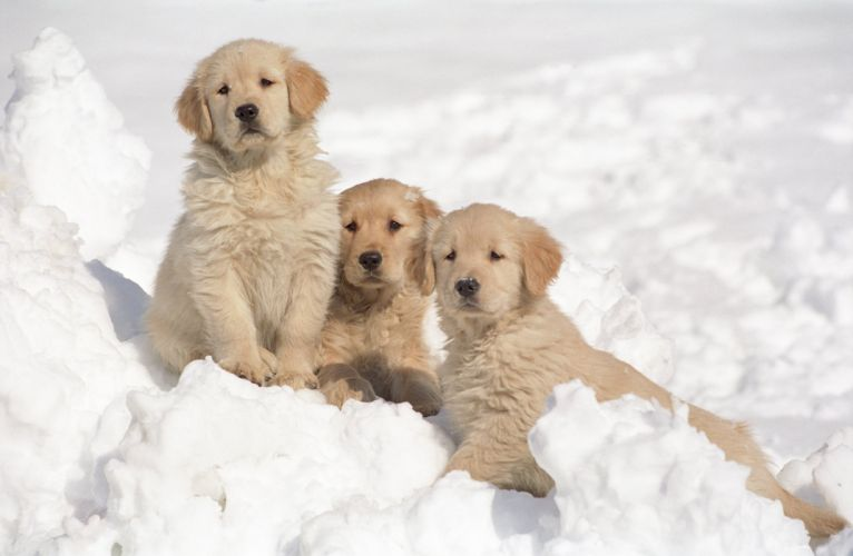 puppies puppy baby dog dogs (13) wallpaper