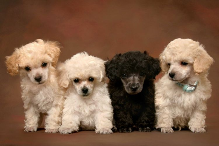 puppies puppy baby dog dogs (35) wallpaper