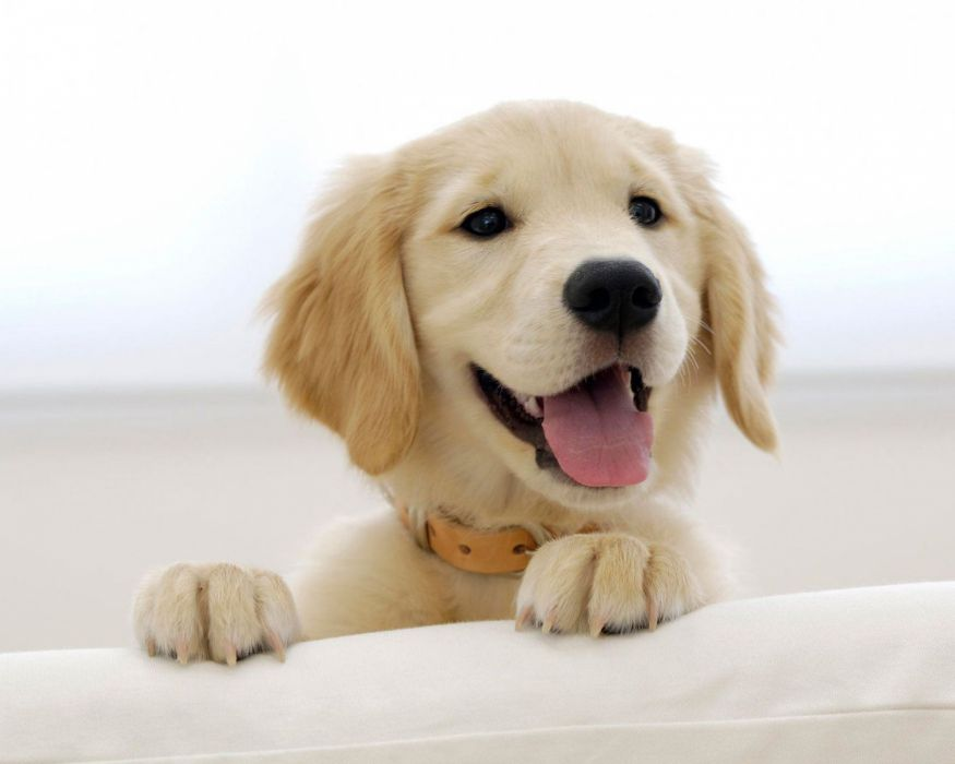 puppies puppy baby dog dogs (44) wallpaper