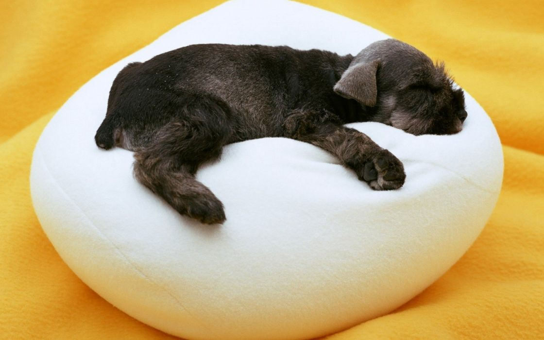 puppies puppy baby dog dogs (47) wallpaper