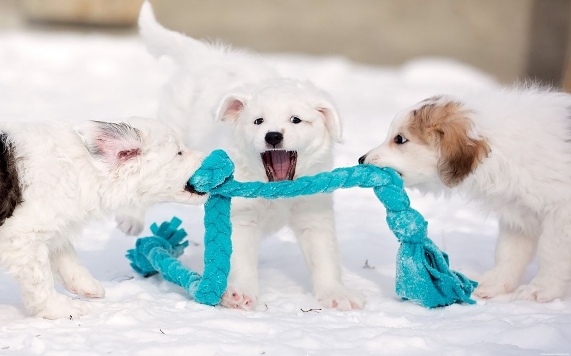 puppies puppy baby dog dogs (53) wallpaper