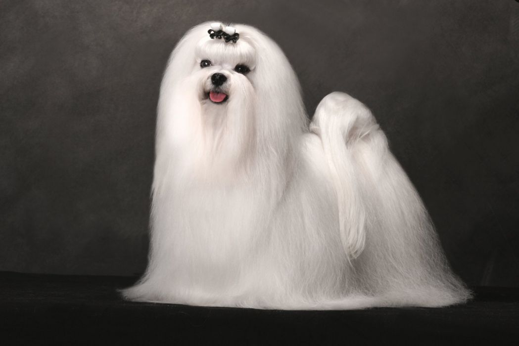dog dogs wallpaper