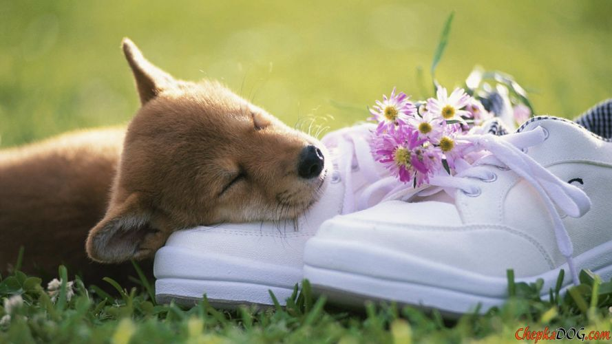 puppies puppy baby dog dogs (77) wallpaper