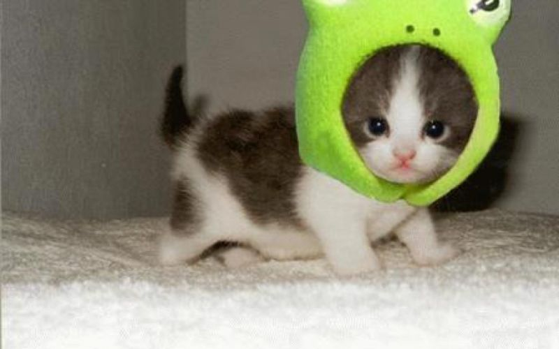 kitten kittens cat cats wallpaper
