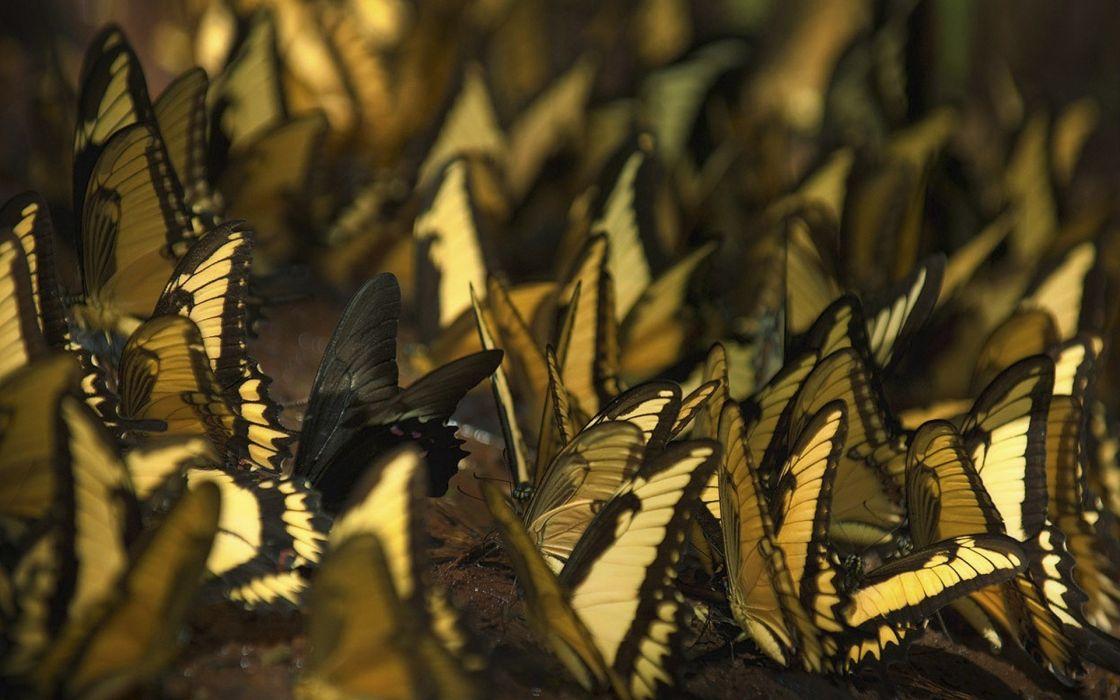 butterflies many butterfly bokeh wallpaper