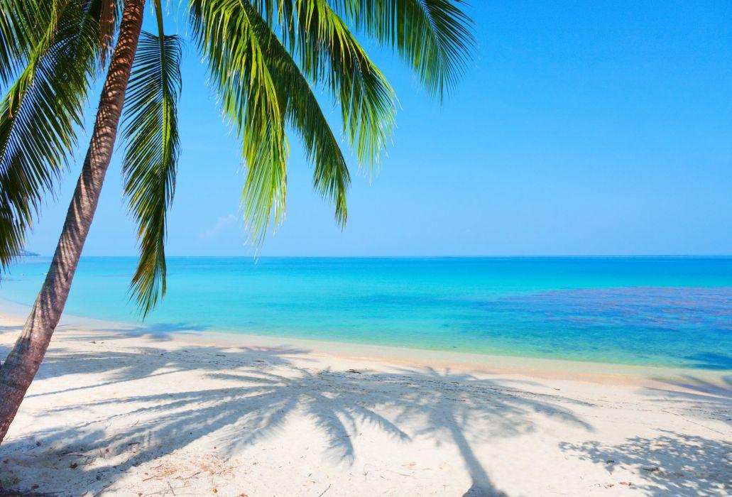 Tropics Palm Trees Sun Beach 4k Hd Desktop Wallpaper For: Beach Reflection Landscape Palm Tree Sea Wallpaper