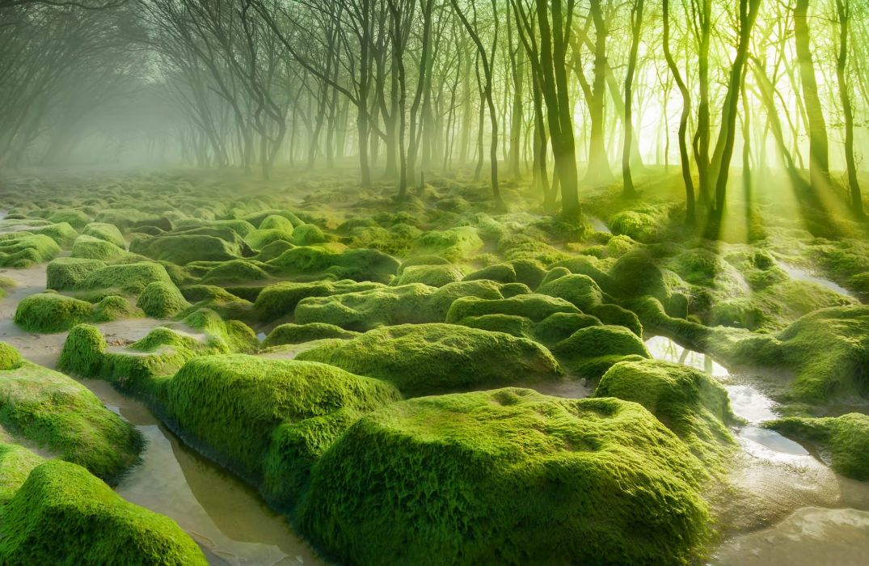 landscape nature forest trees swamp water mist morning wallpaper