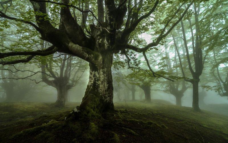landscape mist nature tree wallpaper
