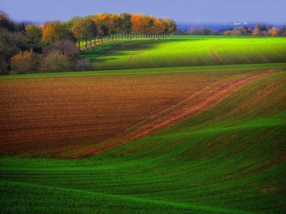 trees autumn field wallpaper