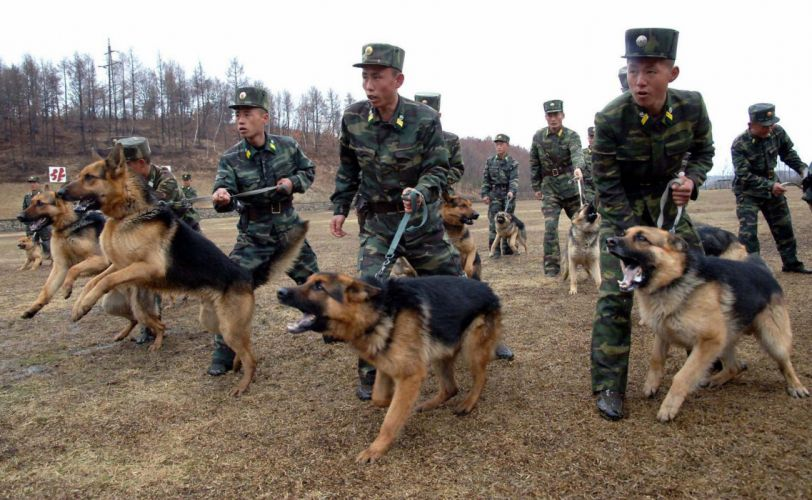 North-Korea soldiers troops dogs military army 4000x2464 wallpaper