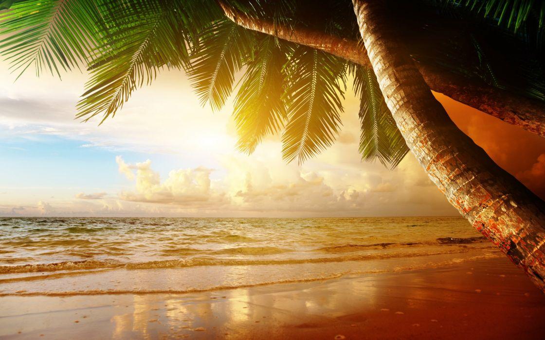 beach coast tropical ocean sunset palm paradise summer sea wallpaper