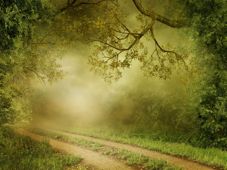 Forests Trail Fog Grass Nature wallpaper