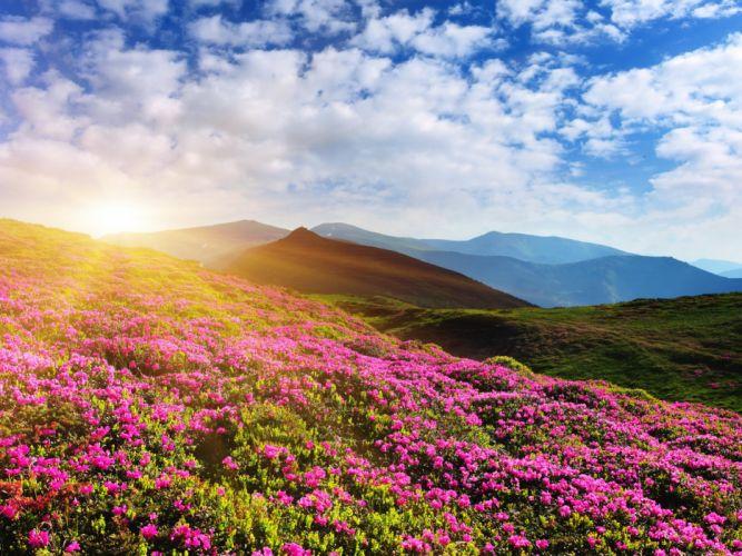 Scenery Sunrises and sunsets Mountains Azalea Sky Nature wallpaper