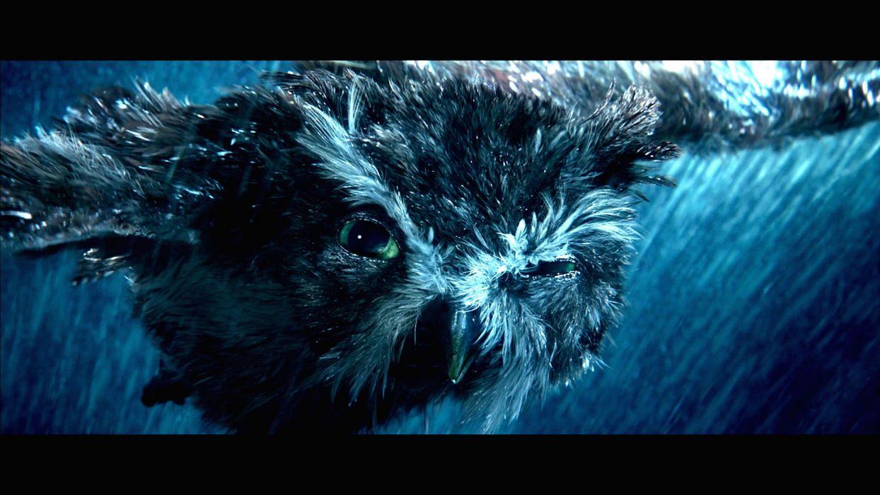 LEGEND GUARDIANS OWLS GAHOOLE animation fantasy adventure family cartoon hoole owl (18) wallpaper