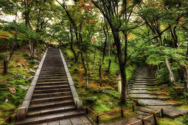 Steps forest wallpaper