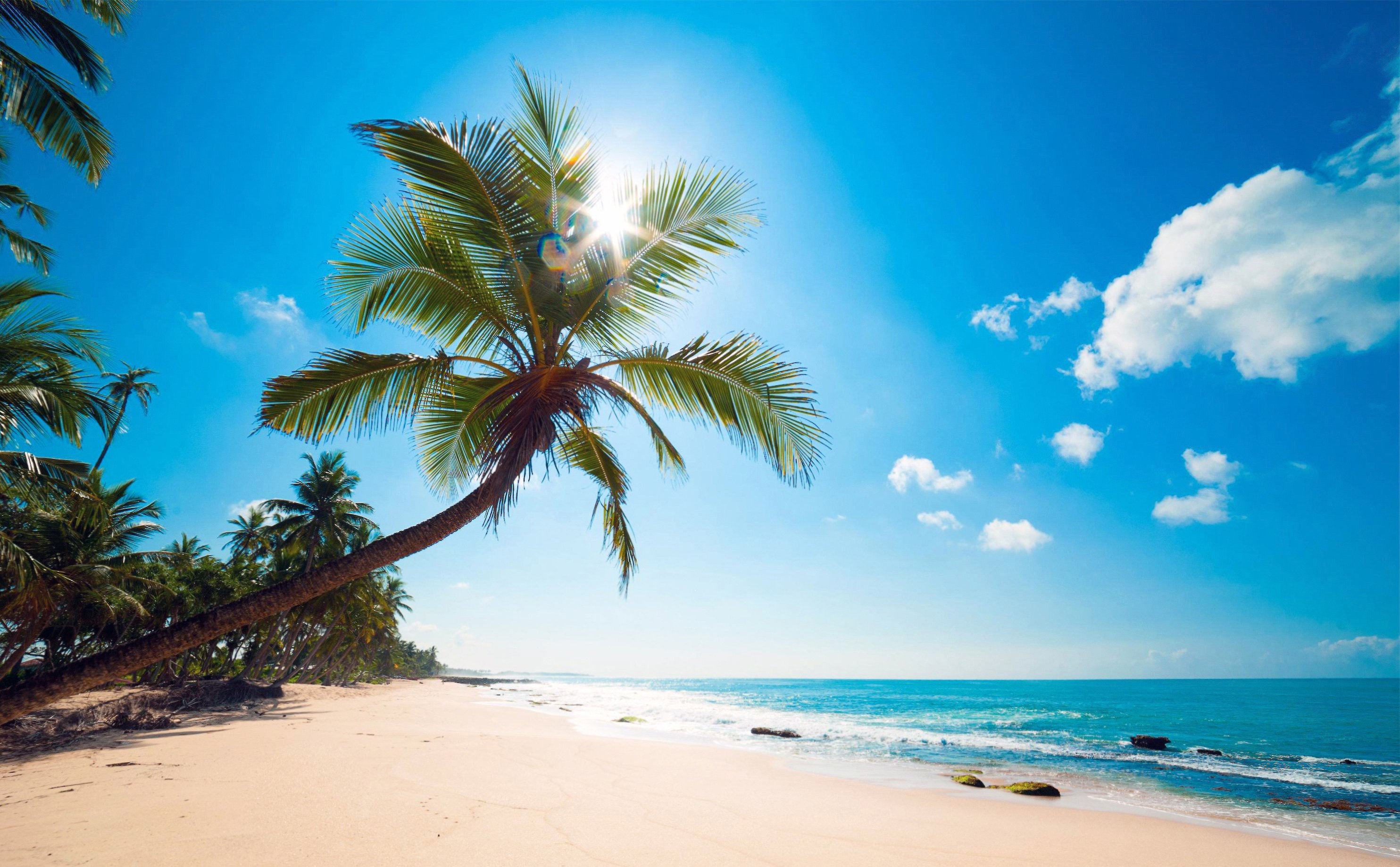 Ocean Palm Trees Beach S Tropics Wallpaper 2968x1837 393087 Wallpaperup