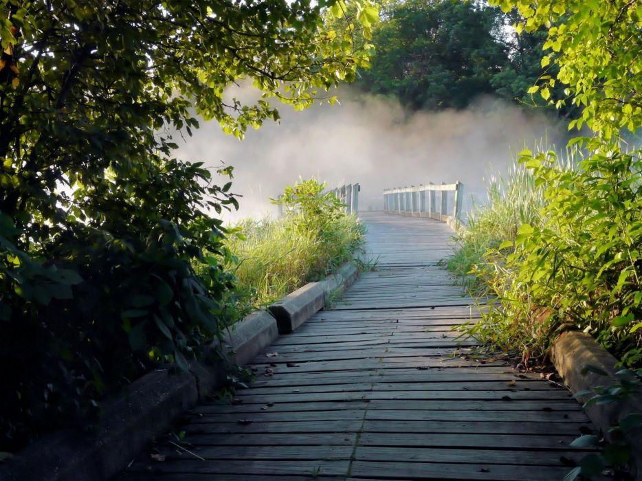 nature trees fog track wallpaper