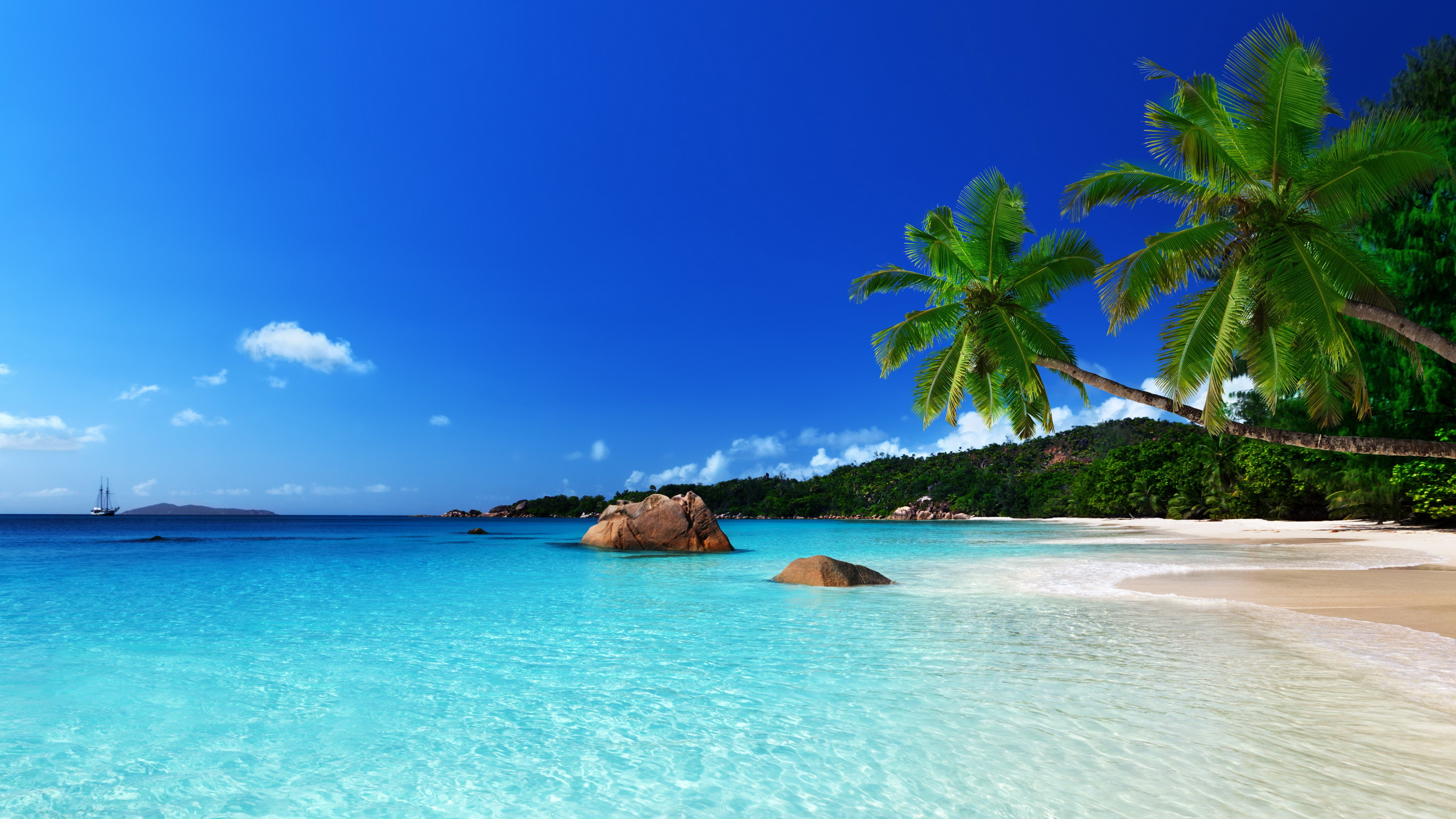 Tropical paradise beach ocean sea palm summer coast ...