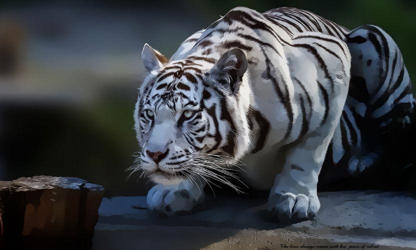 Velvet tiger wallpaper