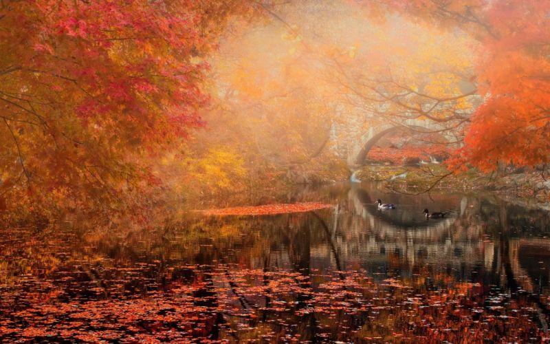 autumn bridge landscape river park wallpaper