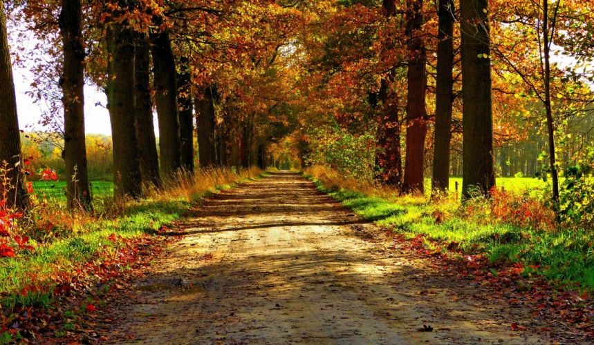 autumn nature forest path park colorful leaves trees road wallpaper