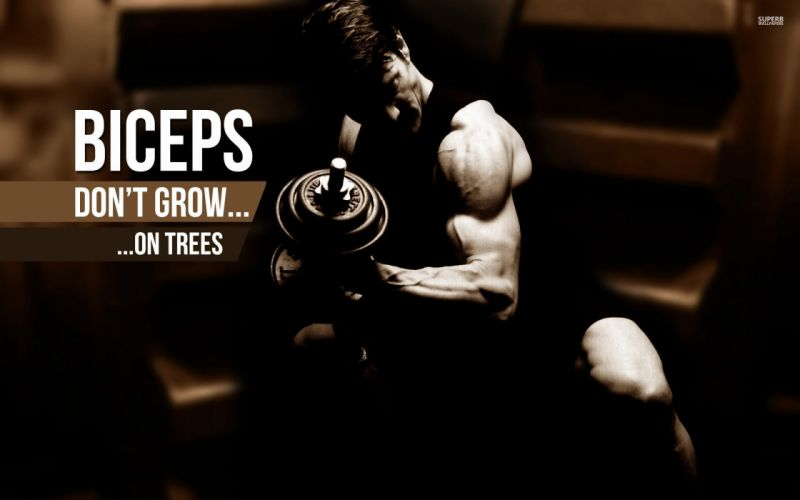 body-building fitness muscle muscles weight lifting Bodybuilding (60) wallpaper