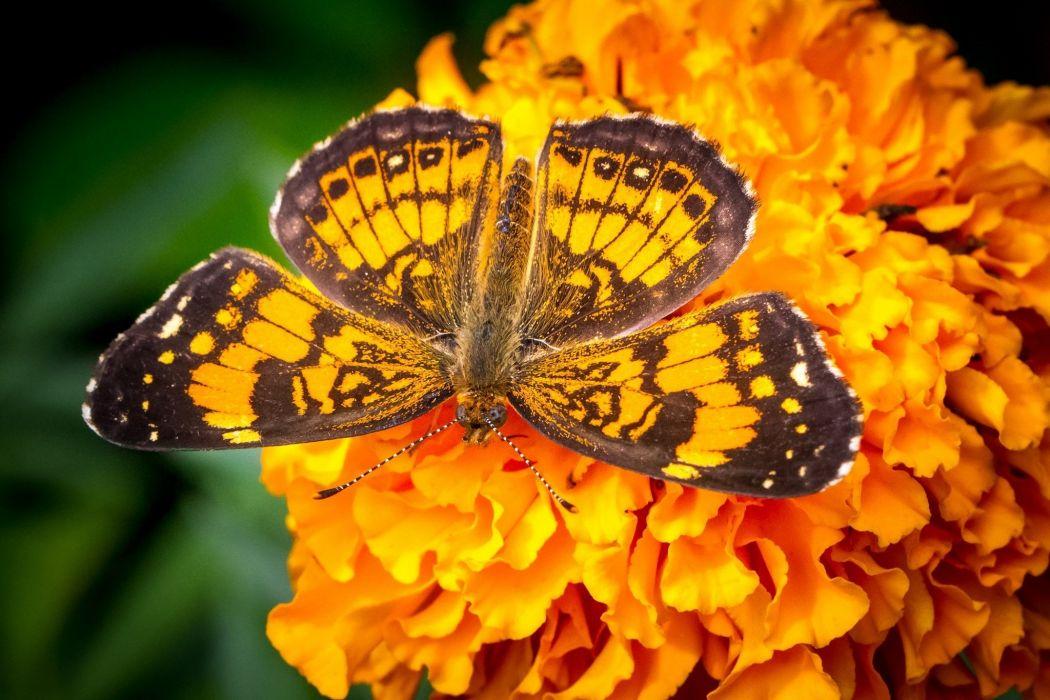 butterfly wings macro flower orange bright wallpaper