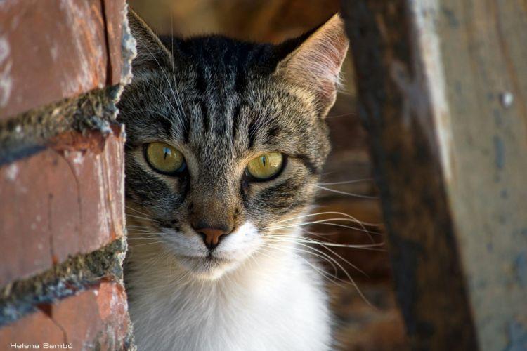 cat face eyes wallpaper