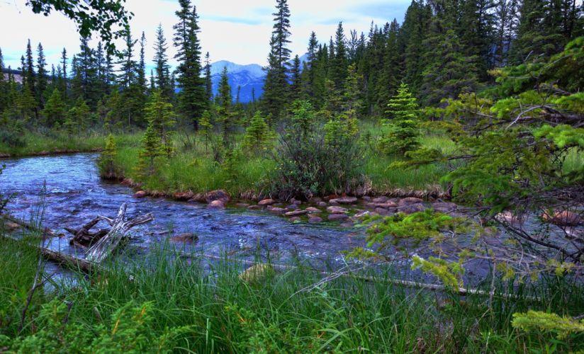 Canada Parks Rivers Jasper Trees Nature wallpaper