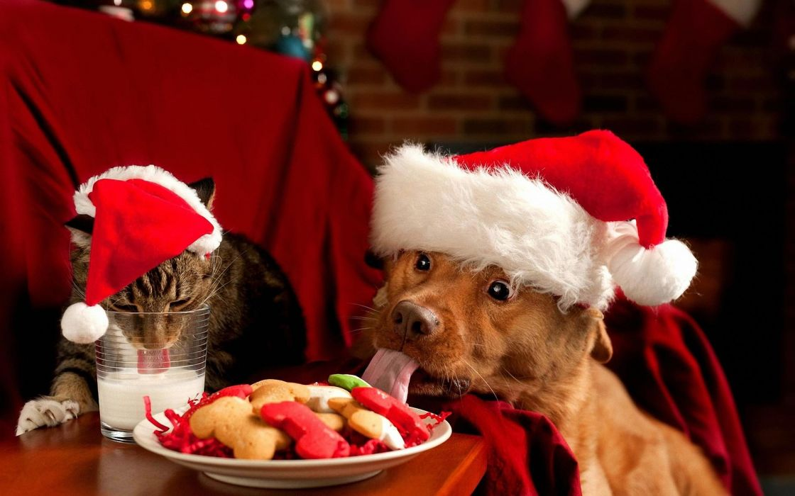 DogCat christmas Cookies wallpaper