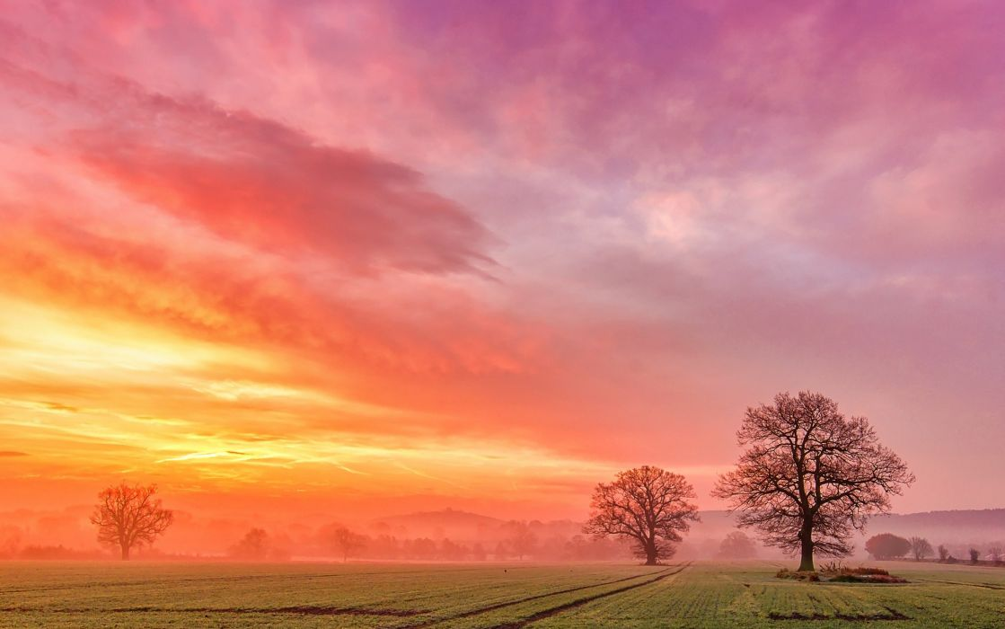 Field Trees Dawn Fog Clouds Sunrise Wallpaper
