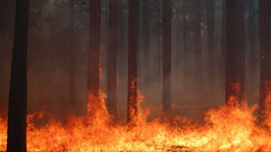 forest fire flames tree disaster apocalyptic (1) wallpaper