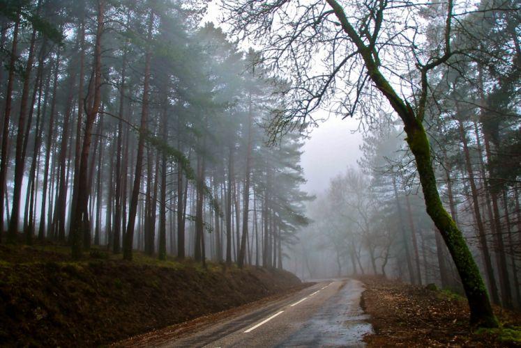 fog forest autumn road wallpaper
