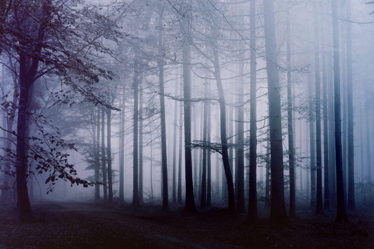fog forest morning path f wallpaper
