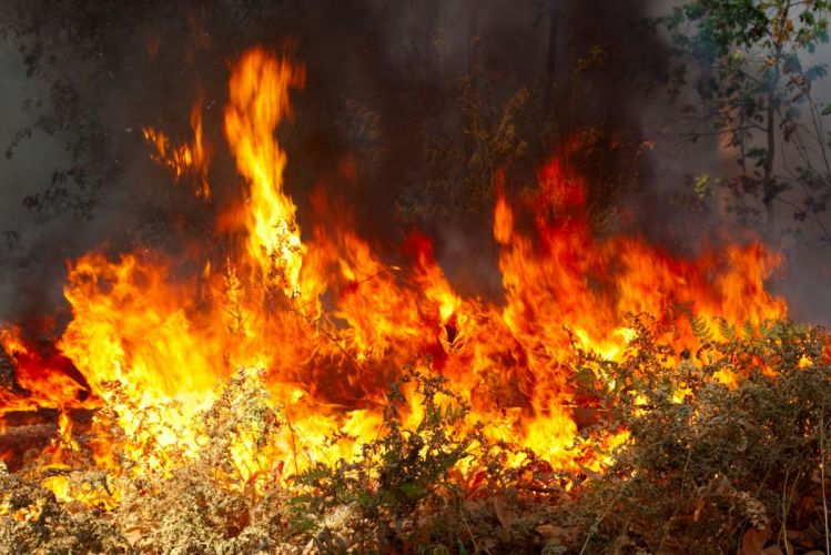 forest fire flames tree disaster apocalyptic (4) wallpaper