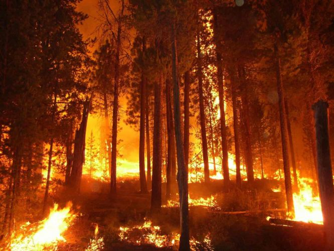 forest fire flames tree disaster apocalyptic (15) wallpaper