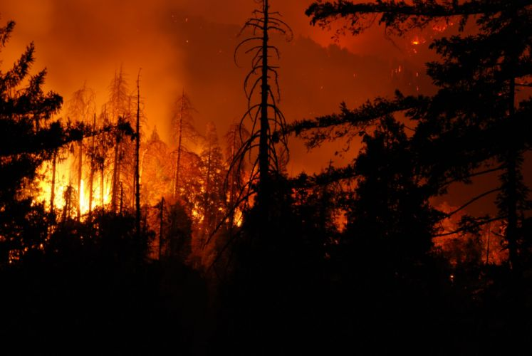 forest fire flames tree disaster apocalyptic (17) wallpaper