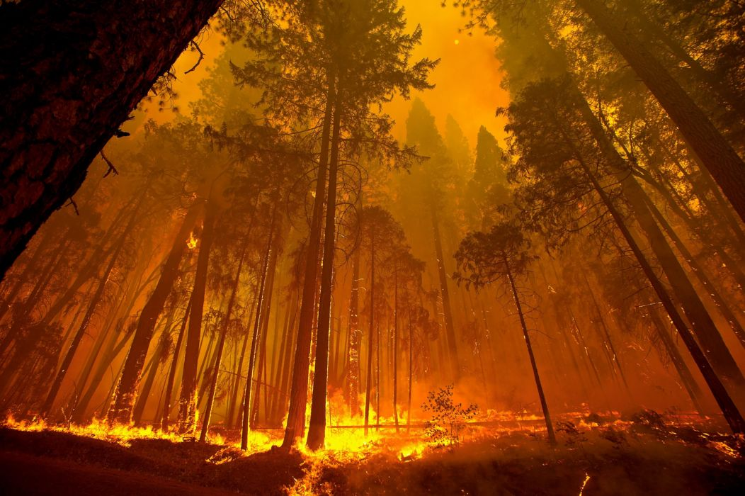 forest fire flames tree disaster apocalyptic (16) wallpaper