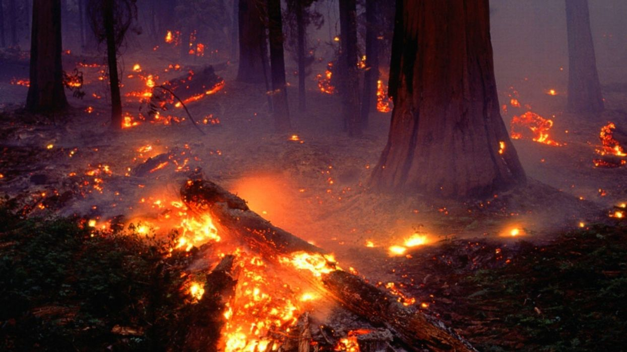 forest fire flames tree disaster apocalyptic (23) wallpaper