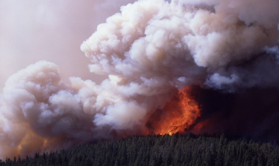 forest fire flames tree disaster apocalyptic (25) wallpaper