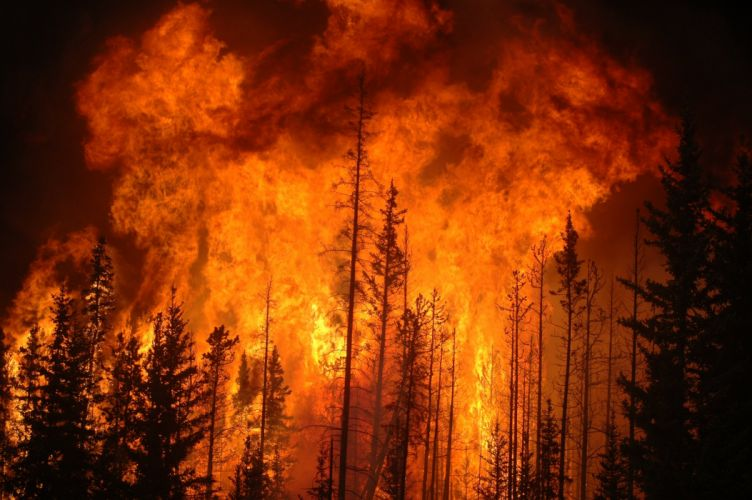 forest fire flames tree disaster apocalyptic (22) wallpaper