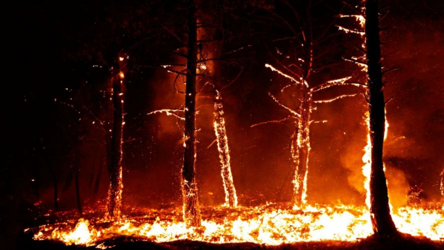 forest fire flames tree disaster apocalyptic (29) wallpaper