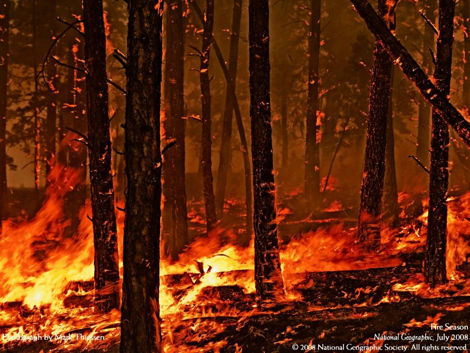 forest fire flames tree disaster apocalyptic (34) wallpaper