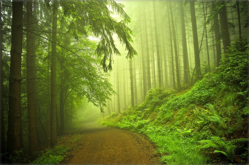 forest road trees fog nature f wallpaper