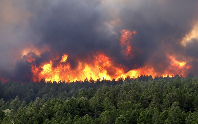 forest fire flames tree disaster apocalyptic (35) wallpaper